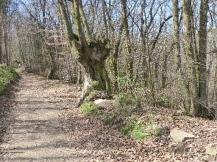 arbre-monts-du-lyonnais-valency-mars2017-chamaneetmarinette
